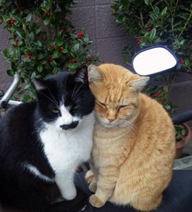 仲の良い2匹の野良猫