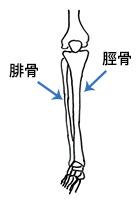 足の骨(腓骨と脛骨)