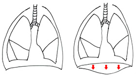 呼吸の仕組み