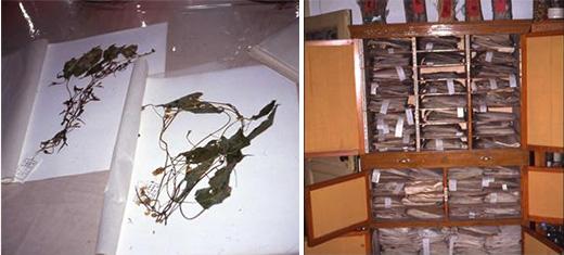中蒙医学院の標本室