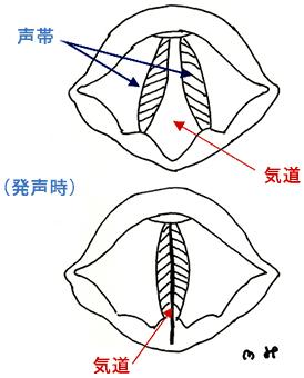 声帯の動き