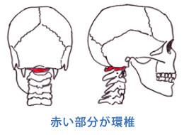 環椎の場所